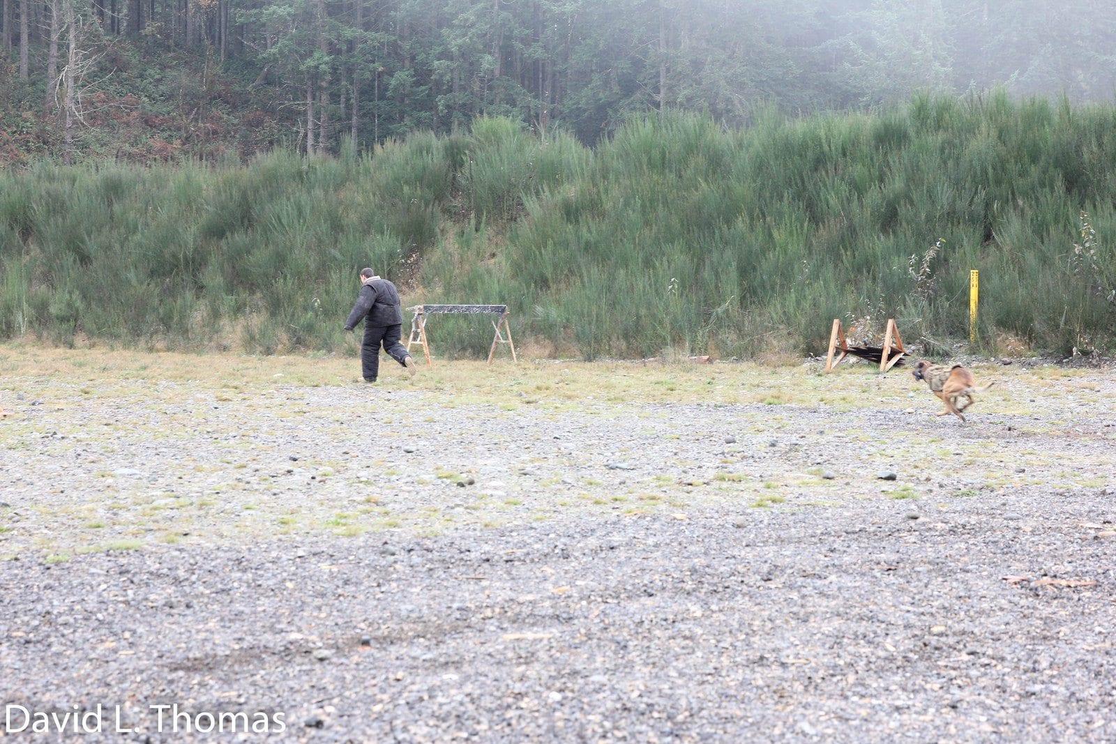 Arden Tough Dog Chase 1