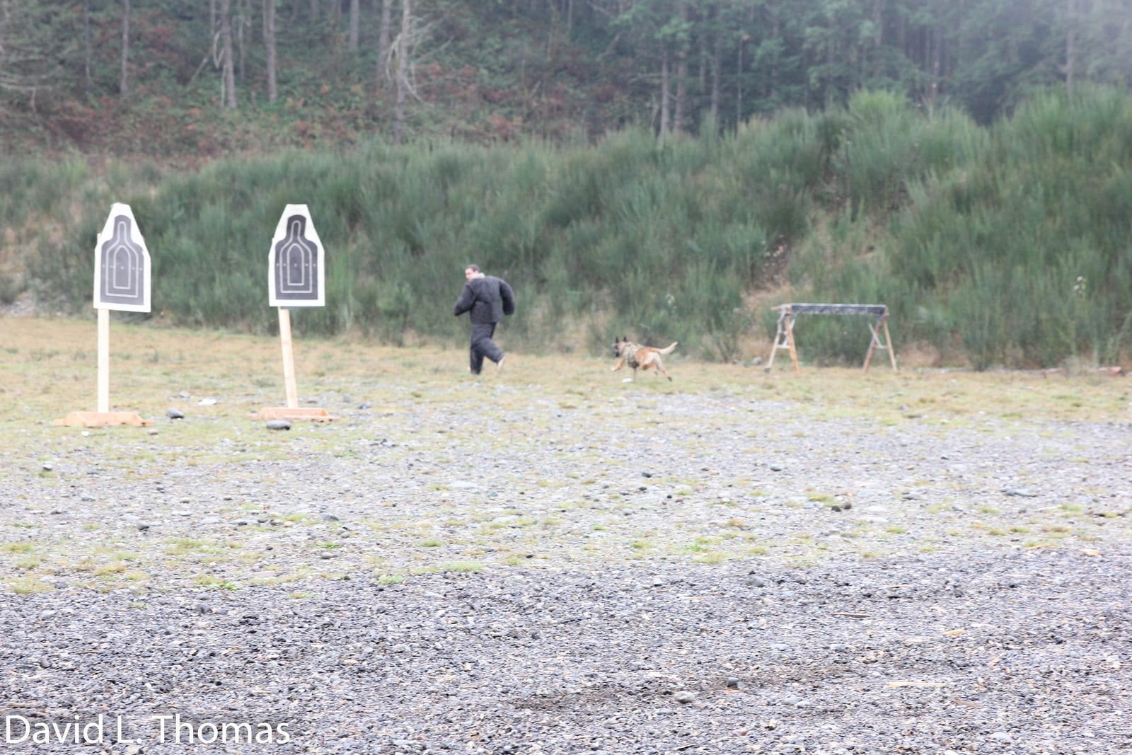 Arden Tough Dog Chase 2