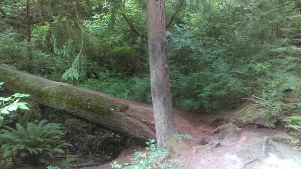 GORUCK Tough 1999 - Day Trail